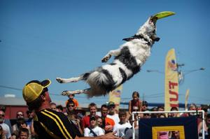 dog performers